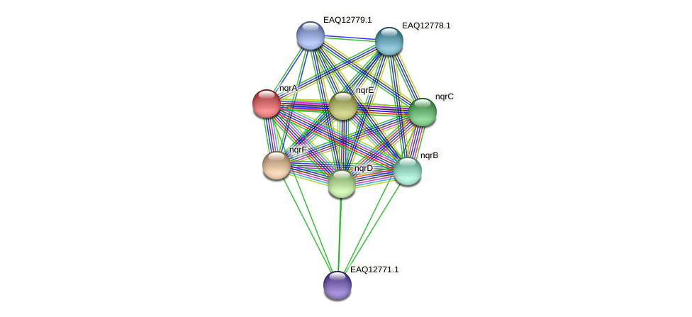 nqrA protein (Maritimibacter alkaliphilus) - STRING interaction network
