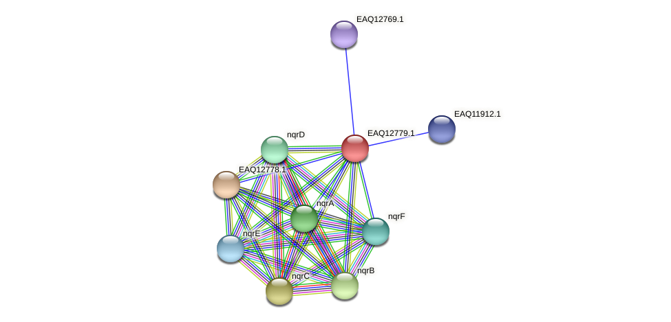 RB2654_06704 protein (Maritimibacter alkaliphilus) - STRING interaction network