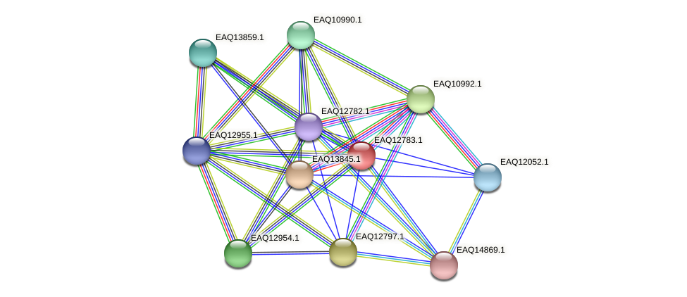 RB2654_06724 protein (Maritimibacter alkaliphilus) - STRING interaction network