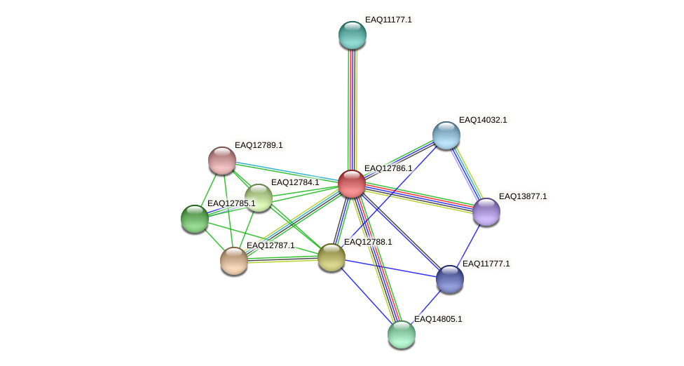 RB2654_06739 protein (Maritimibacter alkaliphilus) - STRING interaction network