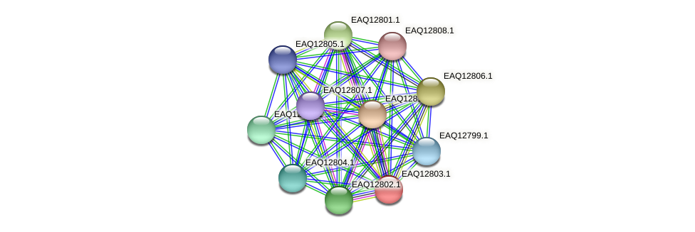 RB2654_06824 protein (Maritimibacter alkaliphilus) - STRING interaction network