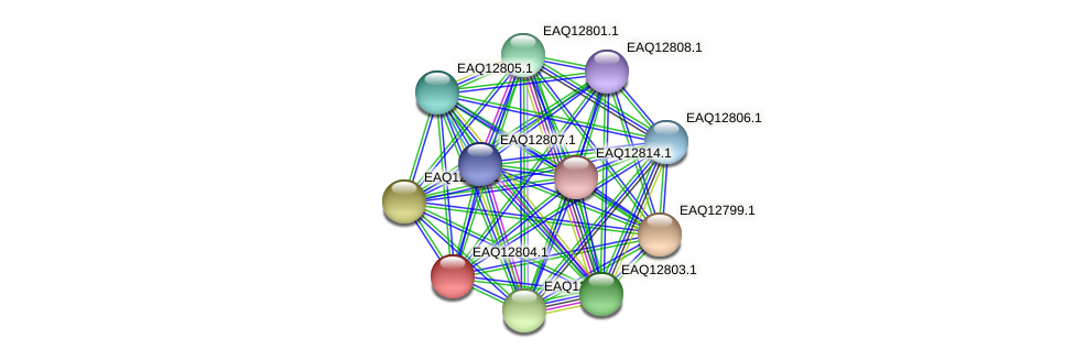 RB2654_06829 protein (Maritimibacter alkaliphilus) - STRING interaction network