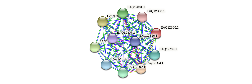 RB2654_06839 protein (Maritimibacter alkaliphilus) - STRING interaction network