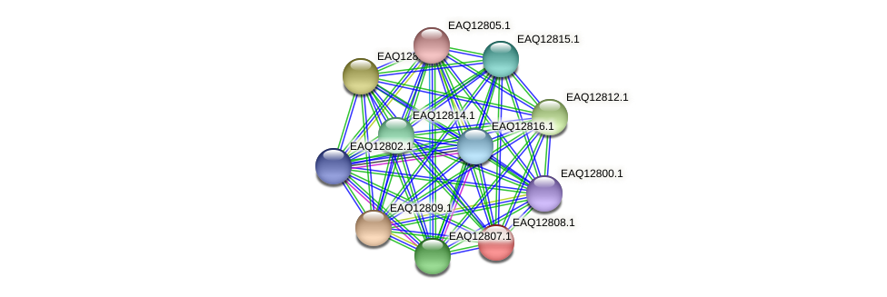 RB2654_06849 protein (Maritimibacter alkaliphilus) - STRING interaction network
