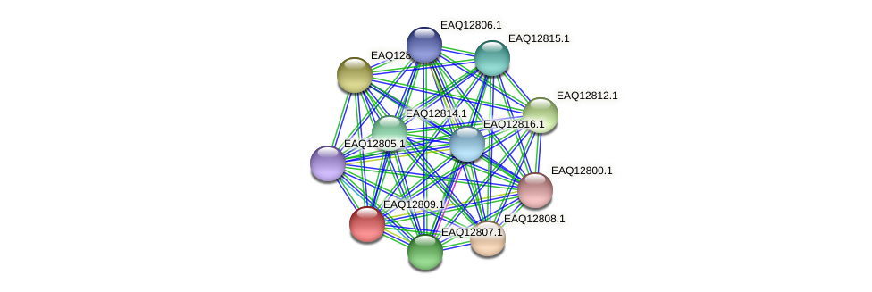 RB2654_06854 protein (Maritimibacter alkaliphilus) - STRING interaction network