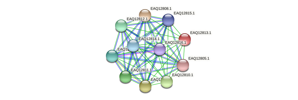RB2654_06874 protein (Maritimibacter alkaliphilus) - STRING interaction network