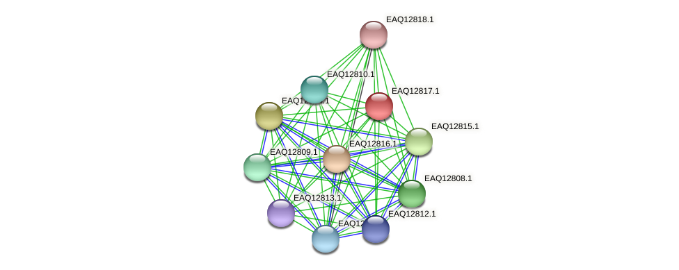 RB2654_06894 protein (Maritimibacter alkaliphilus) - STRING interaction network