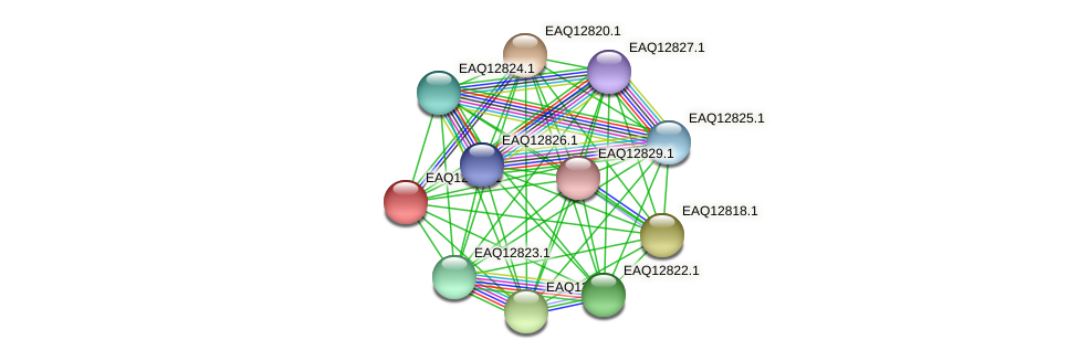 RB2654_06904 protein (Maritimibacter alkaliphilus) - STRING interaction network