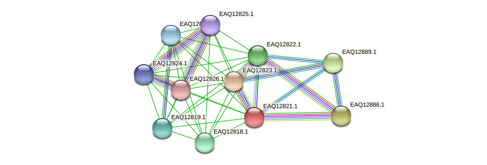 RB2654_06914 protein (Maritimibacter alkaliphilus) - STRING interaction network