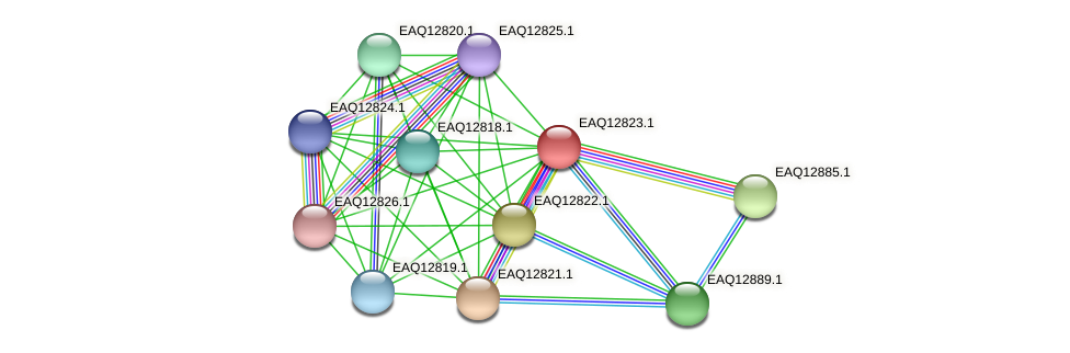 RB2654_06924 protein (Maritimibacter alkaliphilus) - STRING interaction network
