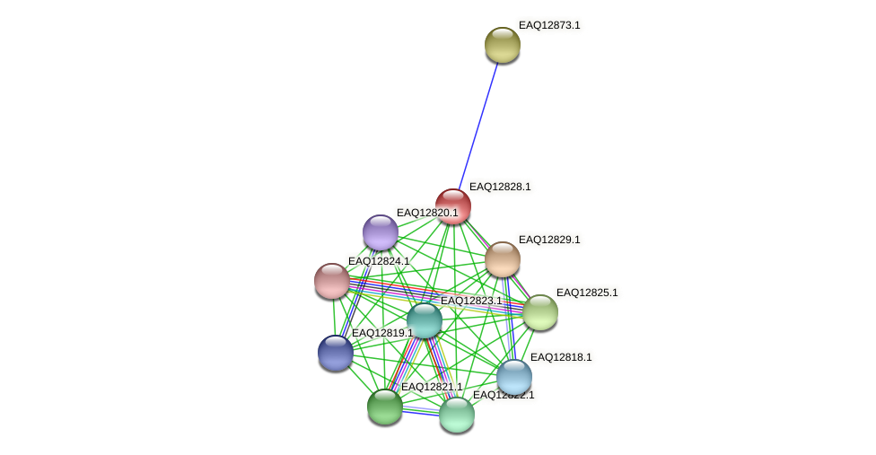 RB2654_06949 protein (Maritimibacter alkaliphilus) - STRING interaction network