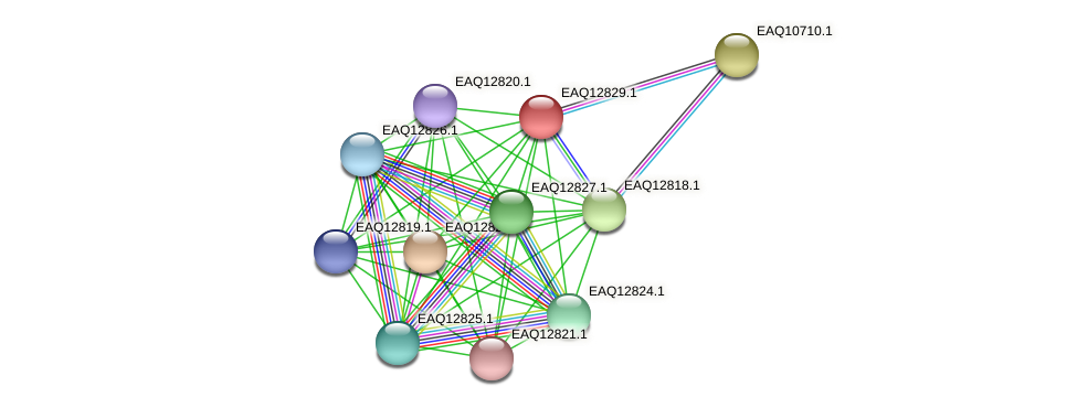 RB2654_06954 protein (Maritimibacter alkaliphilus) - STRING interaction network