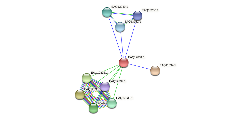 RB2654_06979 protein (Maritimibacter alkaliphilus) - STRING interaction network