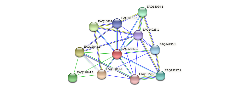 RB2654_07019 protein (Maritimibacter alkaliphilus) - STRING interaction network