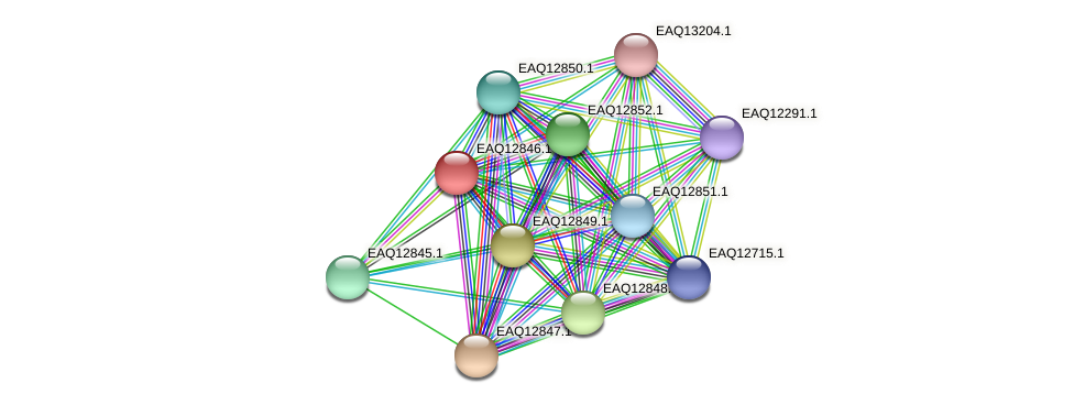 RB2654_07039 protein (Maritimibacter alkaliphilus) - STRING interaction network
