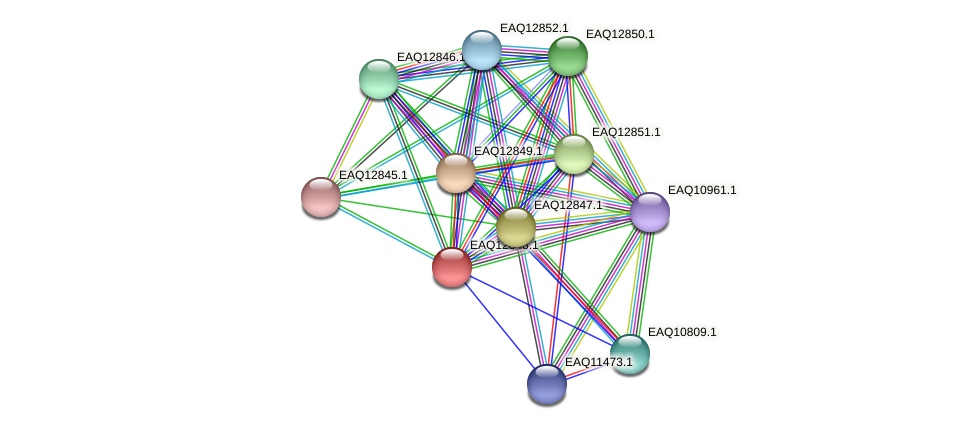 RB2654_07049 protein (Maritimibacter alkaliphilus) - STRING interaction network