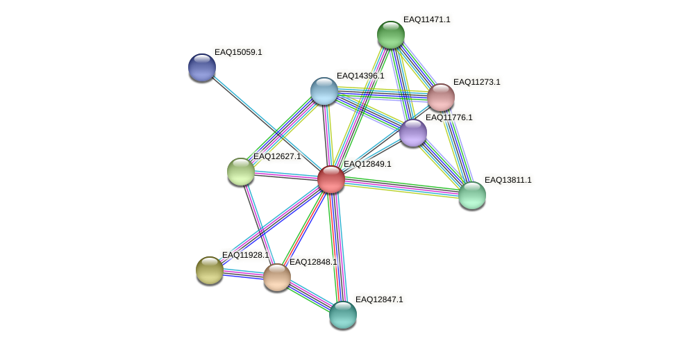 RB2654_07054 protein (Maritimibacter alkaliphilus) - STRING interaction network