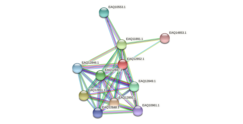 RB2654_07069 protein (Maritimibacter alkaliphilus) - STRING interaction network