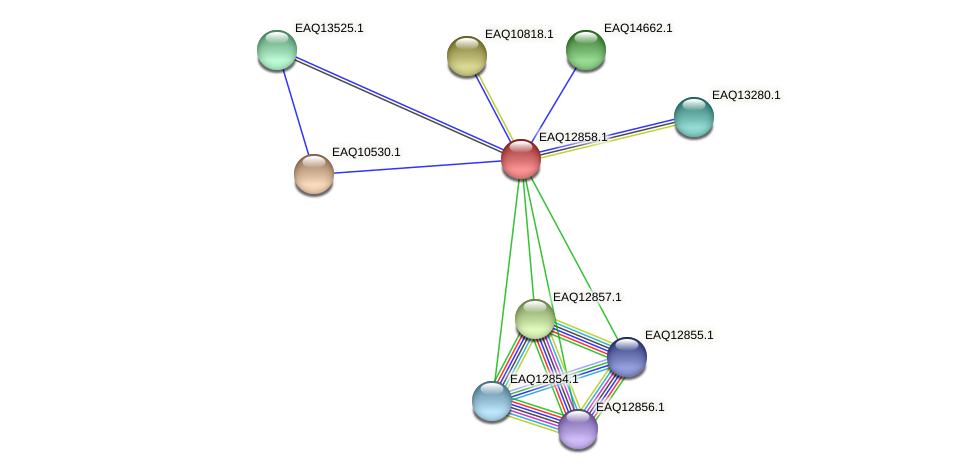 RB2654_07099 protein (Maritimibacter alkaliphilus) - STRING interaction network