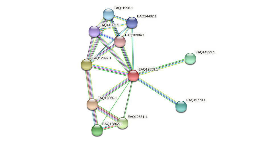 RB2654_07104 protein (Maritimibacter alkaliphilus) - STRING interaction network
