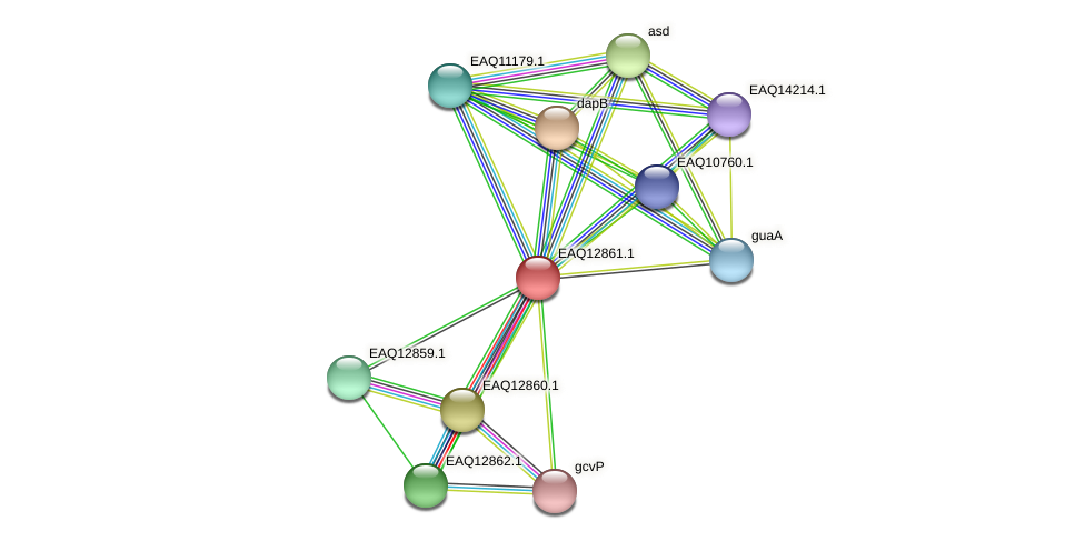 RB2654_07114 protein (Maritimibacter alkaliphilus) - STRING interaction network
