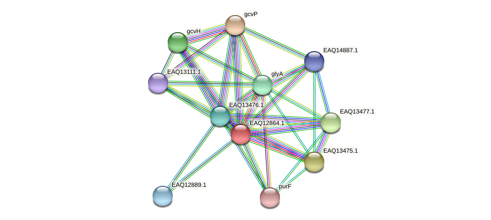 RB2654_07129 protein (Maritimibacter alkaliphilus) - STRING interaction network