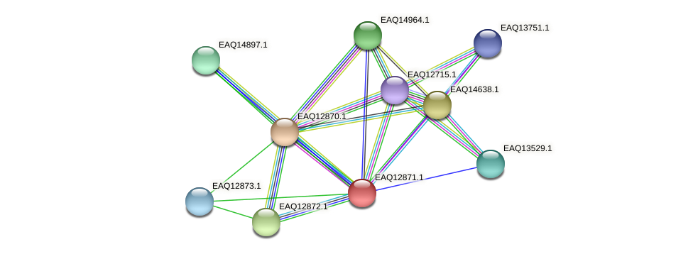 RB2654_07164 protein (Maritimibacter alkaliphilus) - STRING interaction network