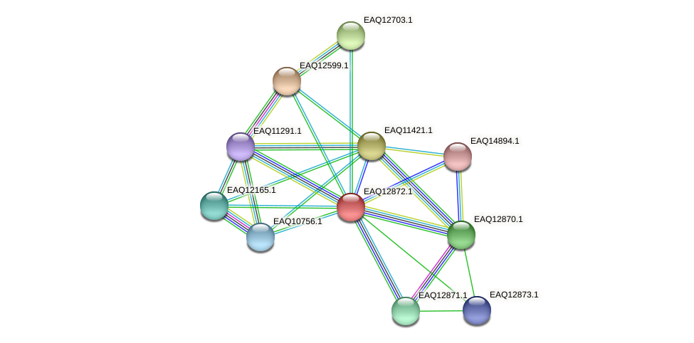RB2654_07169 protein (Maritimibacter alkaliphilus) - STRING interaction network