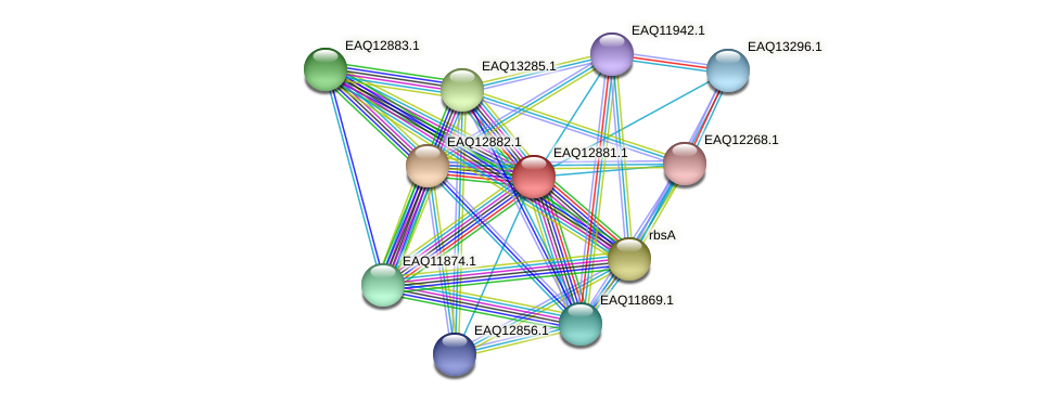RB2654_07214 protein (Maritimibacter alkaliphilus) - STRING interaction network