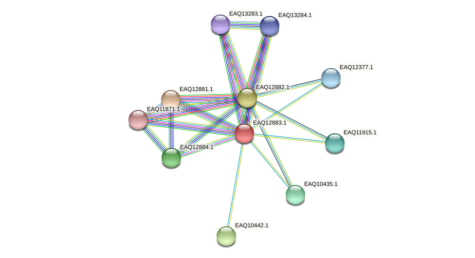 RB2654_07224 protein (Maritimibacter alkaliphilus) - STRING interaction network
