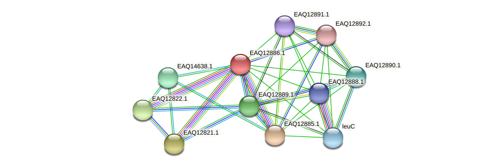 RB2654_07239 protein (Maritimibacter alkaliphilus) - STRING interaction network