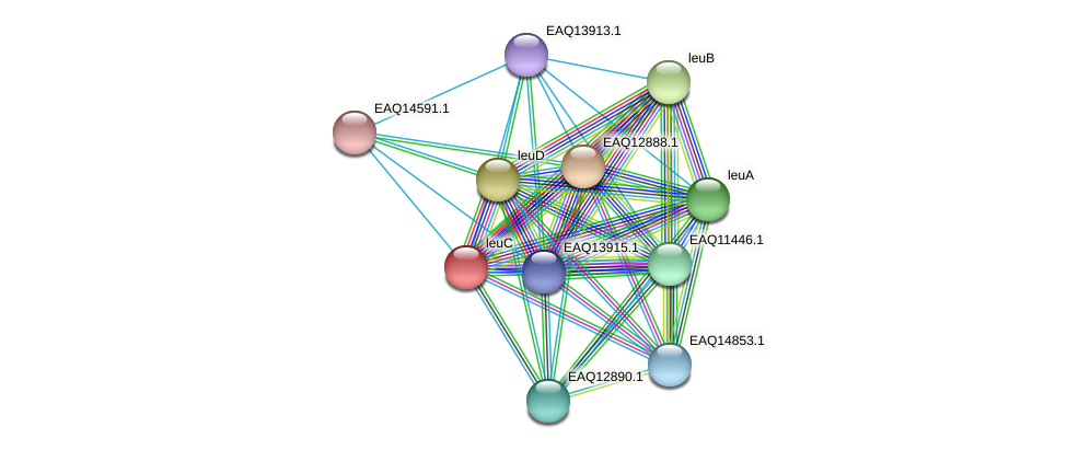 RB2654_07244 protein (Maritimibacter alkaliphilus) - STRING interaction network