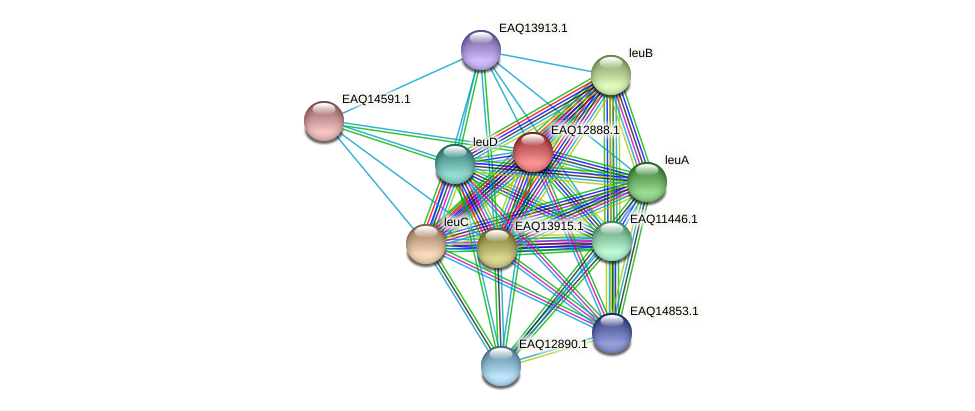 RB2654_07249 protein (Maritimibacter alkaliphilus) - STRING interaction network