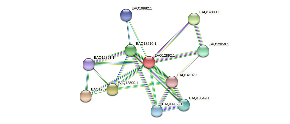 RB2654_07269 protein (Maritimibacter alkaliphilus) - STRING interaction network