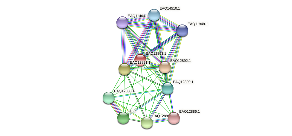 RB2654_07274 protein (Maritimibacter alkaliphilus) - STRING interaction network