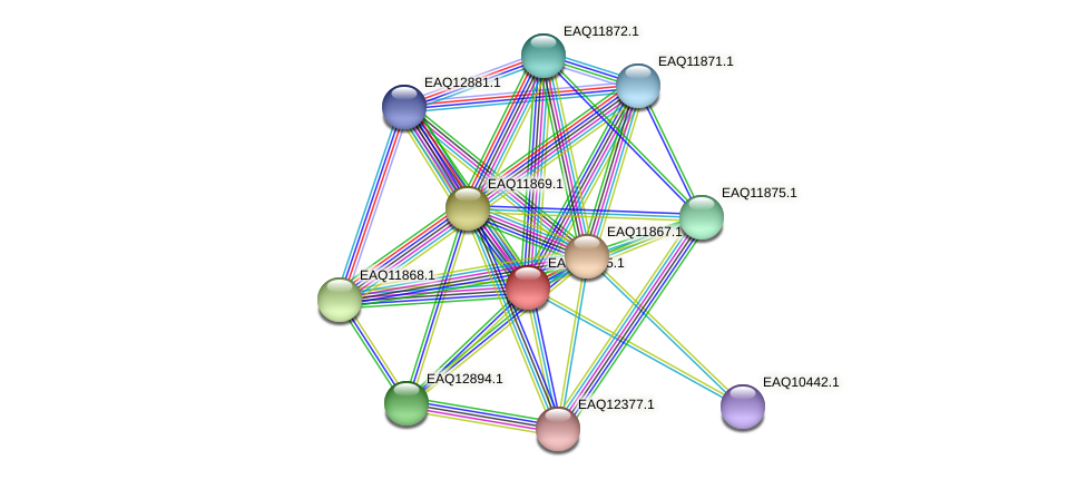 RB2654_07284 protein (Maritimibacter alkaliphilus) - STRING interaction network