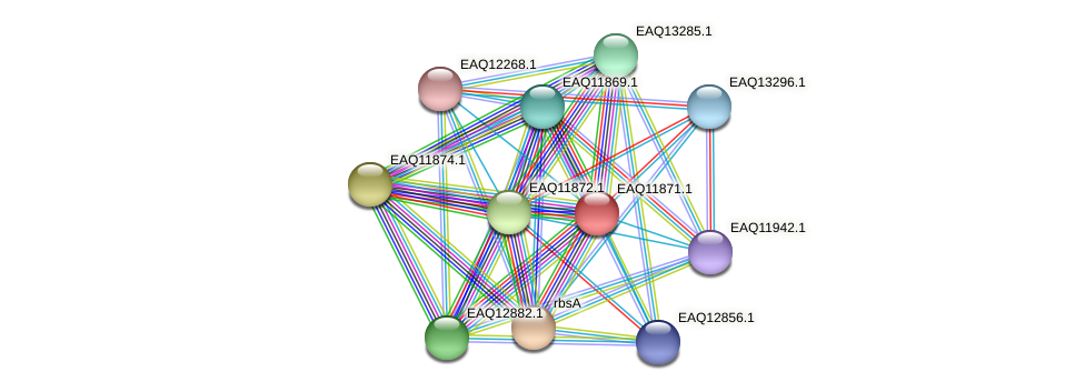 RB2654_07311 protein (Maritimibacter alkaliphilus) - STRING interaction network