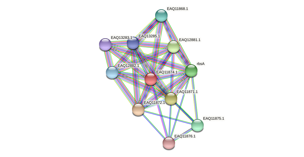 RB2654_07326 protein (Maritimibacter alkaliphilus) - STRING interaction network