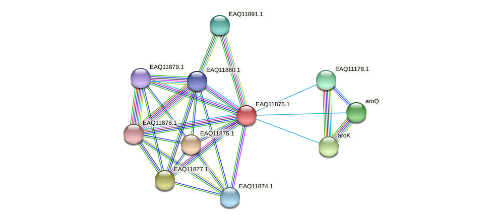 RB2654_07336 protein (Maritimibacter alkaliphilus) - STRING interaction network