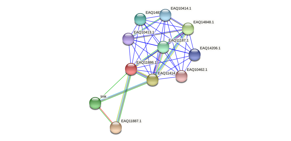 RB2654_07386 protein (Maritimibacter alkaliphilus) - STRING interaction network