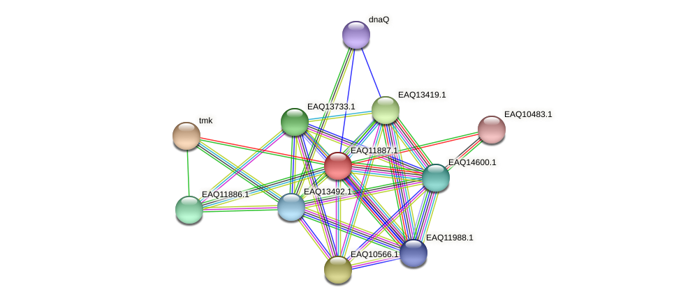 RB2654_07391 protein (Maritimibacter alkaliphilus) - STRING interaction network