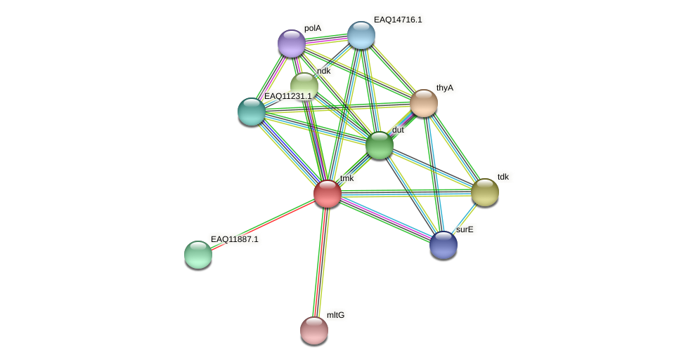 tmk protein (Maritimibacter alkaliphilus) - STRING interaction network
