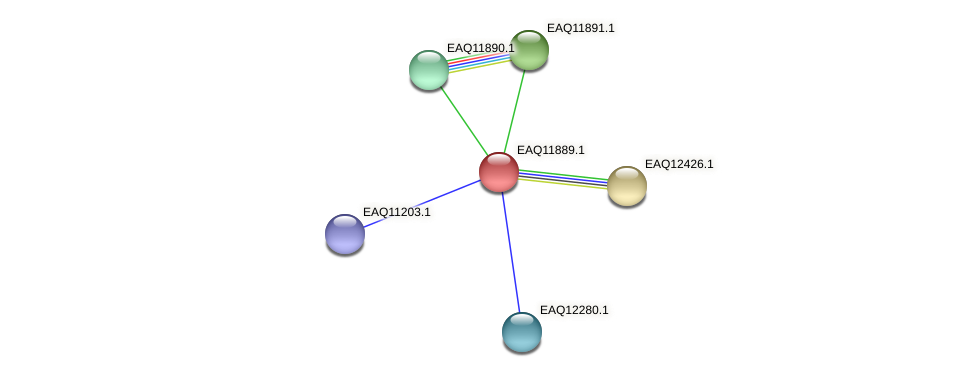 RB2654_07401 protein (Maritimibacter alkaliphilus) - STRING interaction network