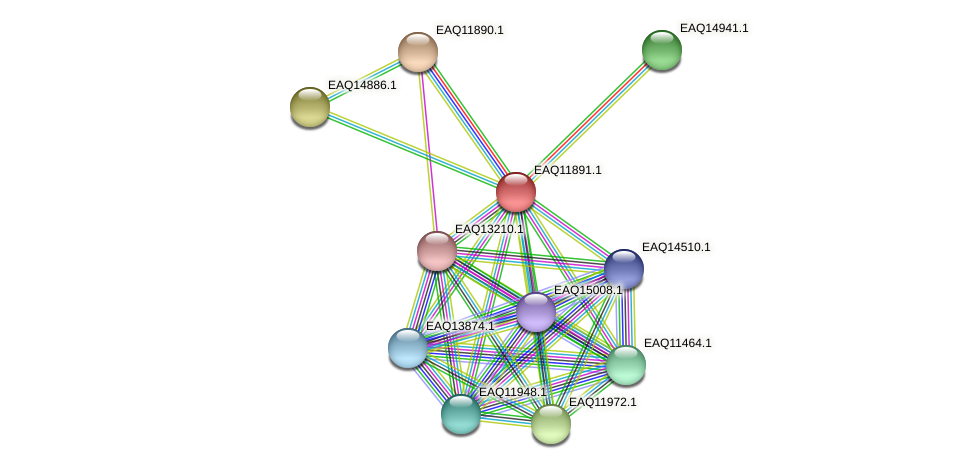 RB2654_07411 protein (Maritimibacter alkaliphilus) - STRING interaction network