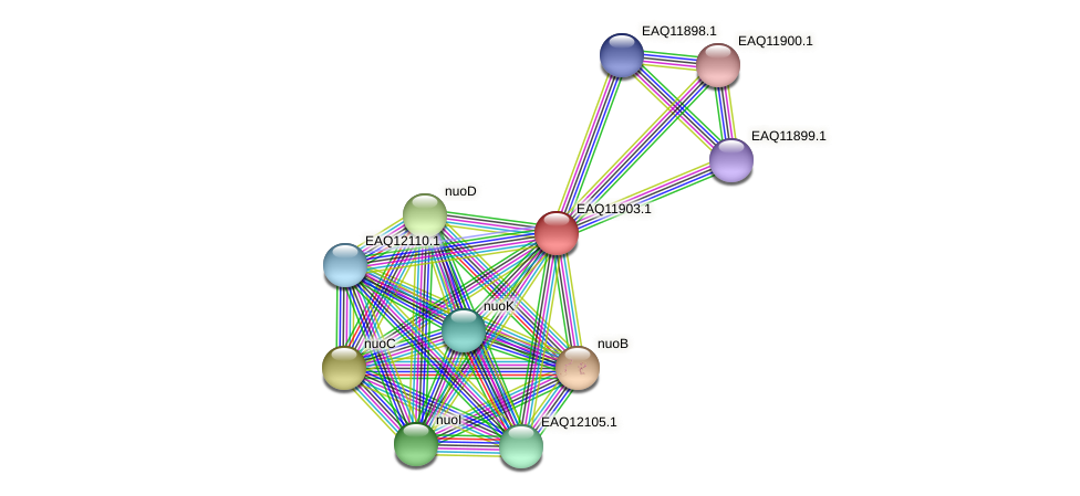 RB2654_07471 protein (Maritimibacter alkaliphilus) - STRING interaction network