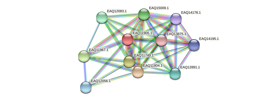 RB2654_07481 protein (Maritimibacter alkaliphilus) - STRING interaction network