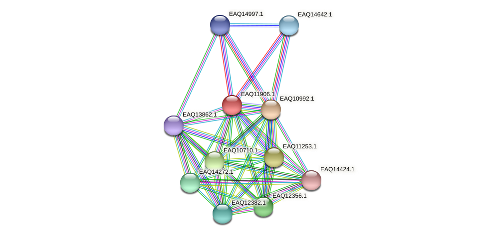 RB2654_07486 protein (Maritimibacter alkaliphilus) - STRING interaction network