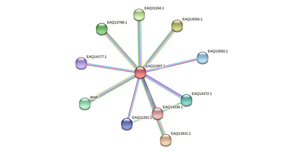 RB2654_07491 protein (Maritimibacter alkaliphilus) - STRING interaction network