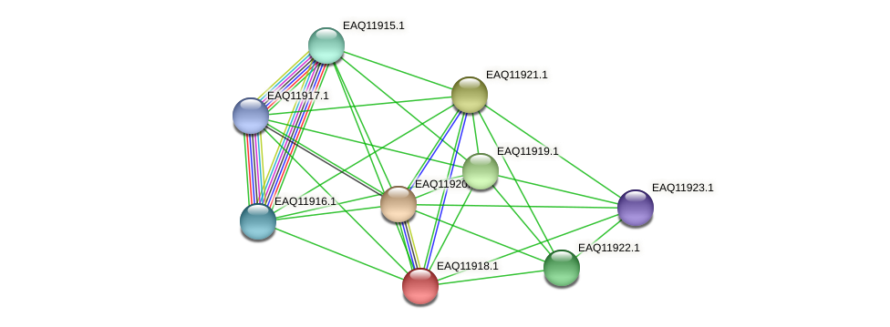 RB2654_07546 protein (Maritimibacter alkaliphilus) - STRING interaction network