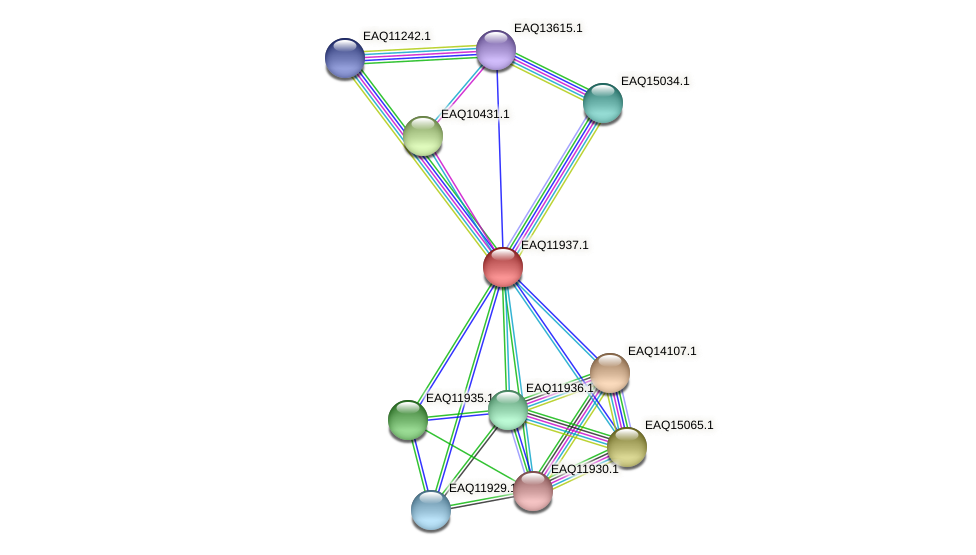 RB2654_07641 protein (Maritimibacter alkaliphilus) - STRING interaction network
